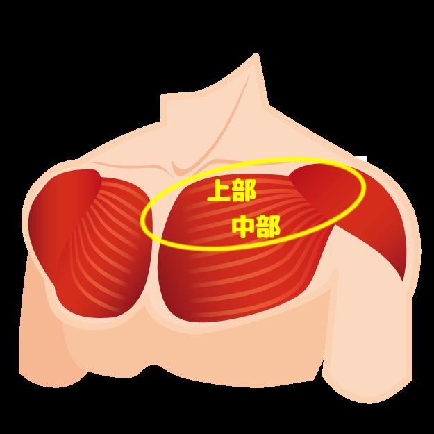 大胸筋上部~中部